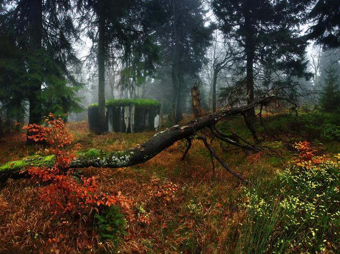 Řopíki rozrzucone posród drzew.