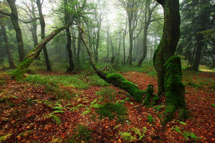 Późne lato i wczesna jesień to najlepsza pora na odwiedzenie Dvorskiego lesu.