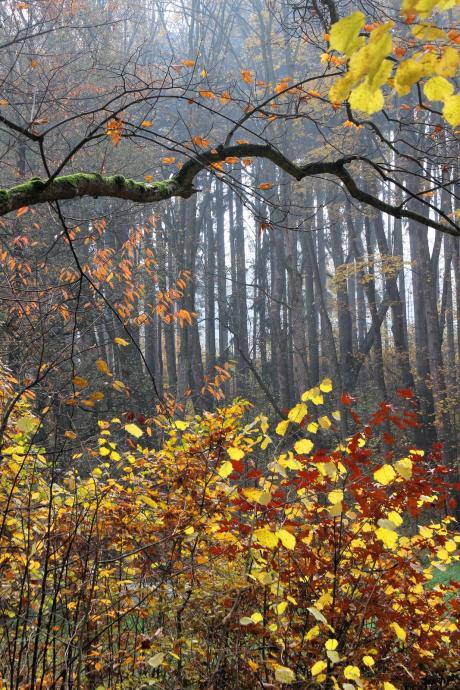 Kolory jesieni nad Polanicą