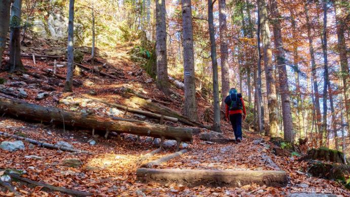 Wracamy do Krościenka. Spacer jesiennym lasem to jednak sama przyjemność