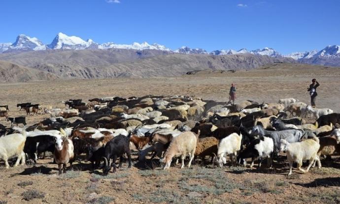 Pasterze i ich stado. Pamir.