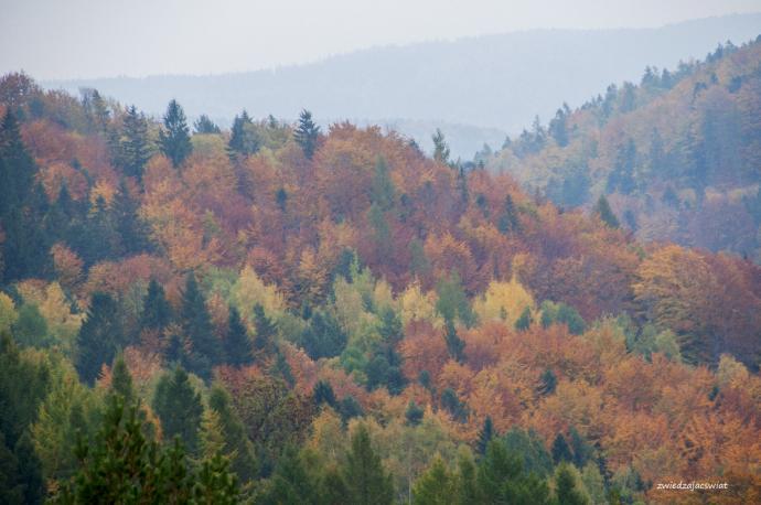 Okolica góry Żar