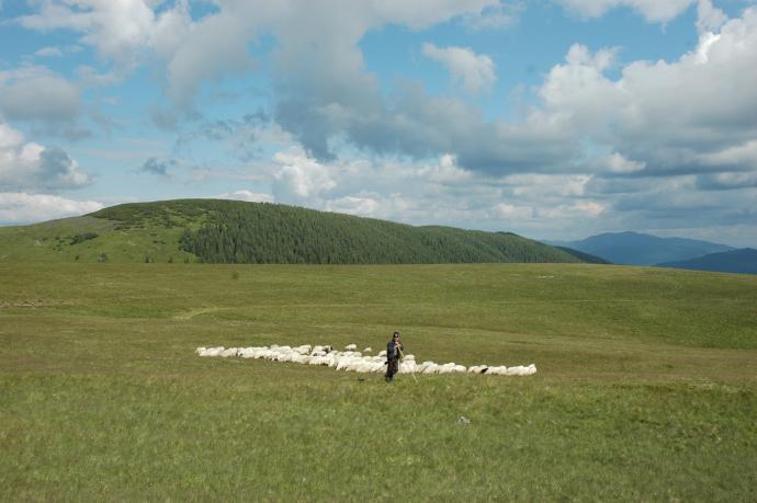 Jeden z ostatnich pasterzy widzianych na krańcu cywilizacji