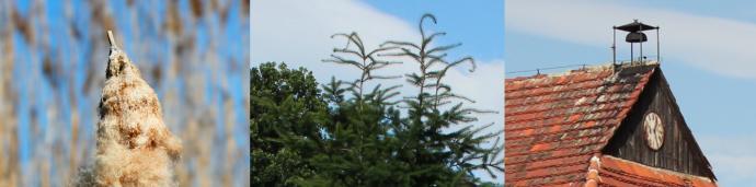 Zalety lustrzanki w górach - od lewej: manipulacja głębią ostrości pozwalająca rozmyć tło, bardzo dokładne odwzorowanie zieleni, bardzo niski poziom szumów.