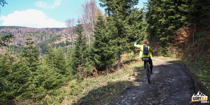 Ścieżka rowerowa biegnie przez malowniczy leśny rejon