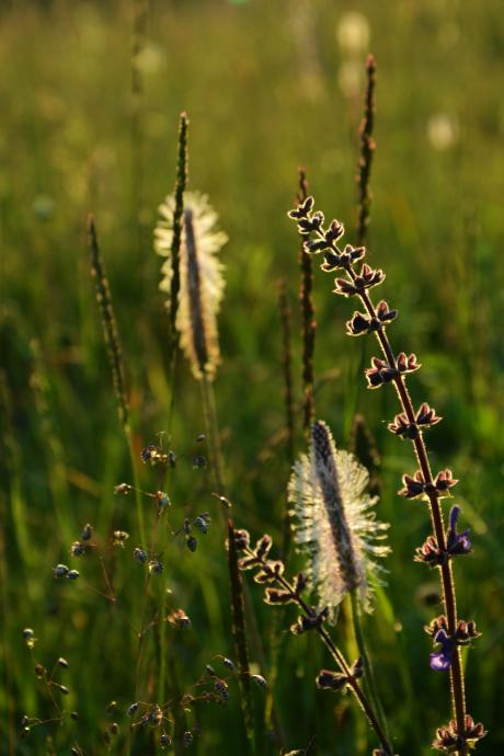 detale chorwackich łąk