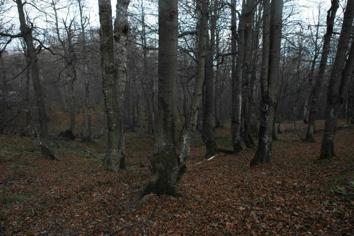 Las poniżej linii granicznej