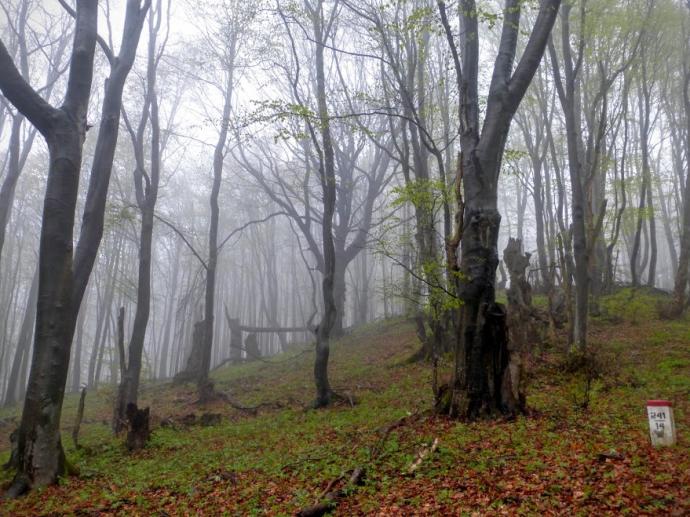 Drzewa i mgła