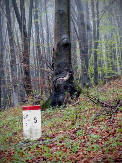 Demoniczne drzewo