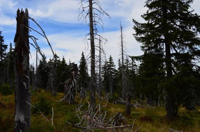 Cmentarzyska ogołoconych drzew