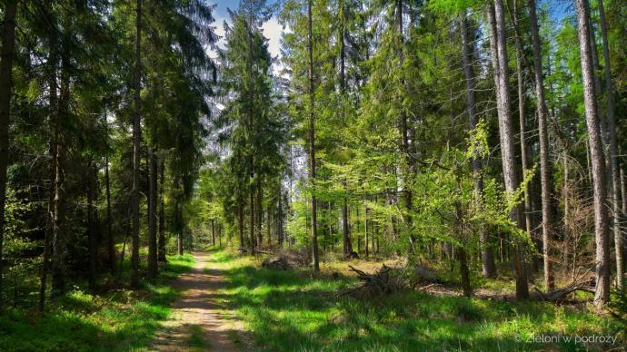 Fragmenty przez las pozwalają nieco się schłodzić