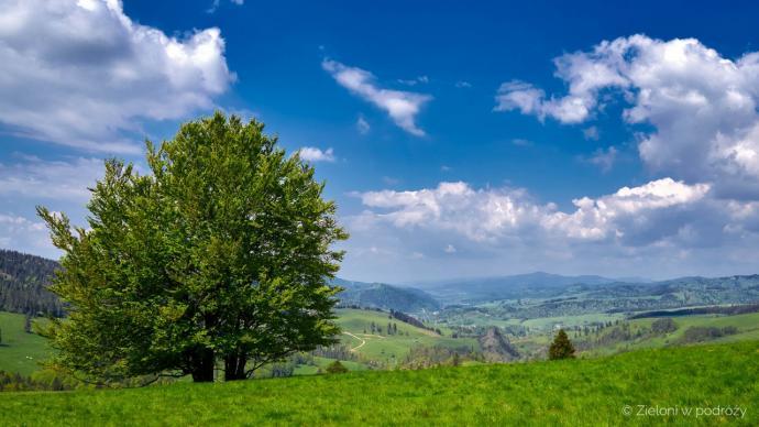 Okolice Przełęczy Rozdziela. Jest zielono i ciepło