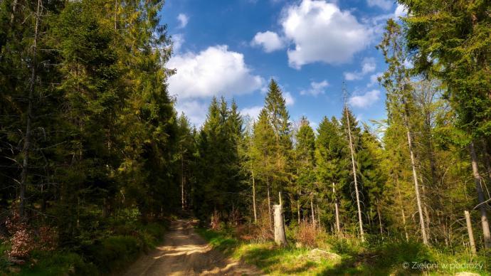 Popołudniowe słońce jest już łagodniejsze, a spacer lasem relaksujący