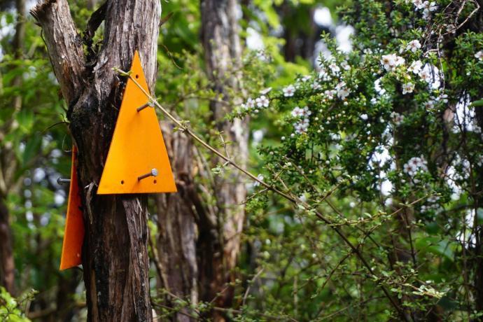 Typowe oznaczenie szlaku w lasach i zaroślach