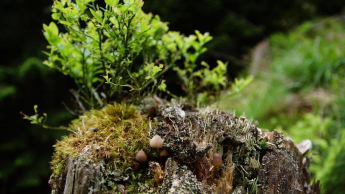 Natura w miniaturze na pieńku