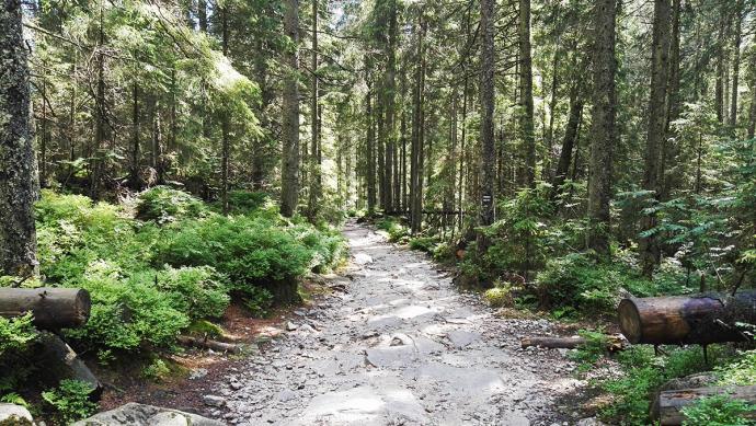 Droga do Doliny Pięciu Stawów 2