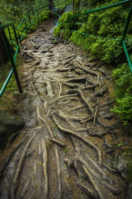 Korzenie na szlaku