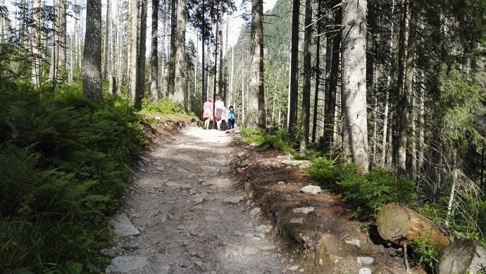 Las w drodze do Wodogrzmotów Mickiewicza