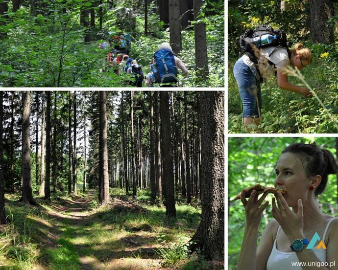 Szlakiem zielonym z Bystrzycy Kłodzkiej w kierunku Schroniska PTTK Jagodna
