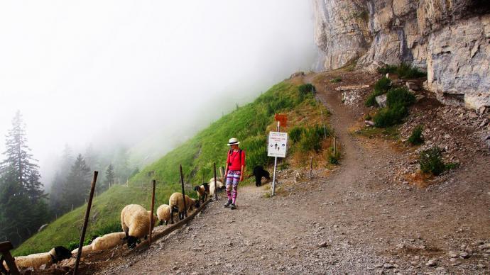 Owce pod skałami