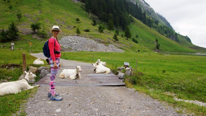 Kozy na drodze (i pod mostem)