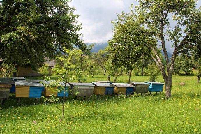 Tu mieszkają ukraińskie pszczoły