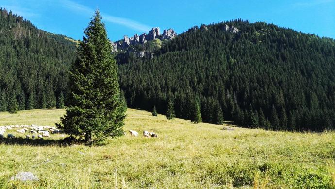 Polana Chochołowska na której do tej pory wypasane są owce. W tle Mnichy Chochołowskie