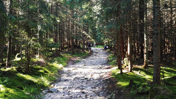Las na początku Wyżniej Doliny Chochołowskiej