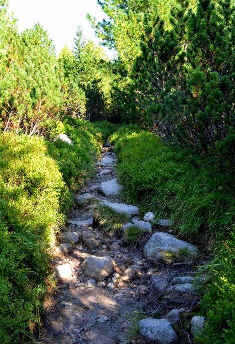 Ścieżka wśród kosodrzewiny