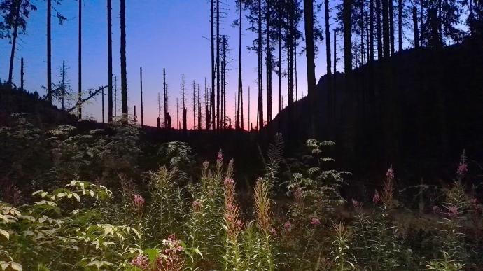 Wschód słońca w Dolinie Roztoki