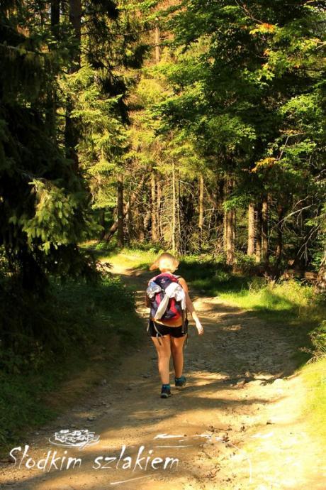 W drodze przez las