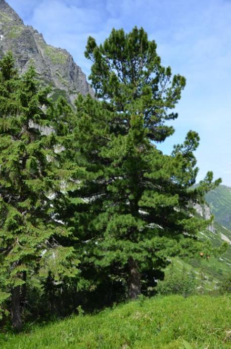 Doliną Hlińską na Koprowy Wierch