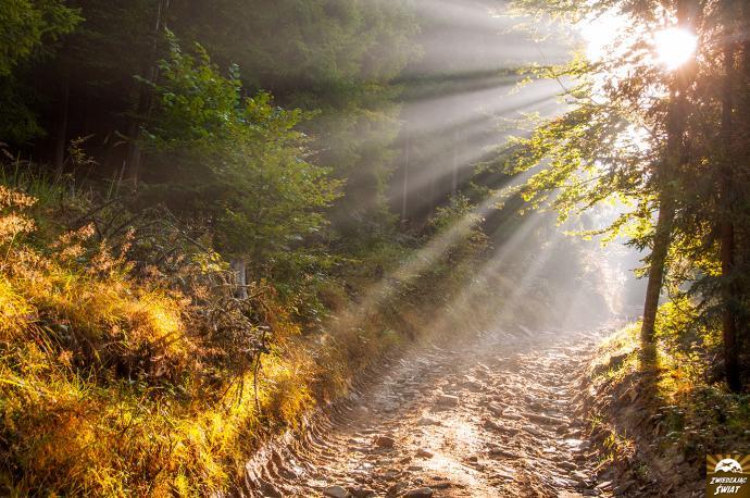 Droga w stronę Mładej Hory