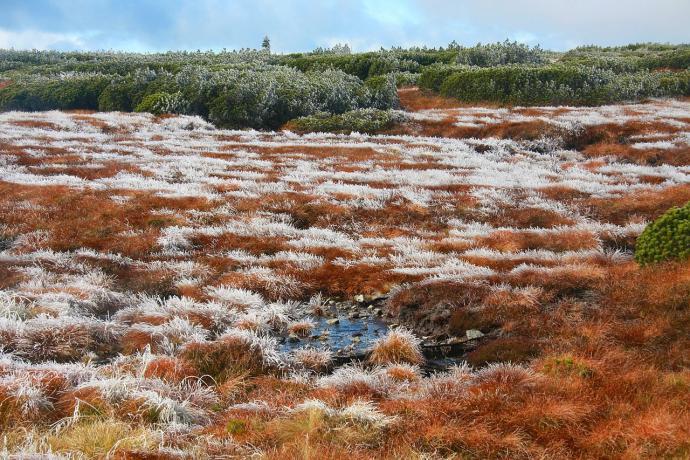 Torfowiska na równi pod Śnieżką