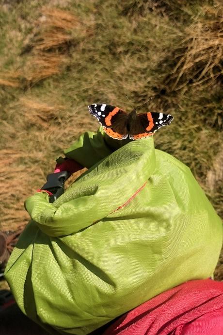 Motyl na pokrowcu namiotu Jack Wolfskin Skyrocket II Dome