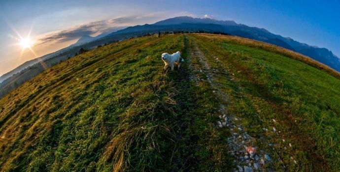 Widok spod Daczy Turysty i Biegacza w Zakopanem