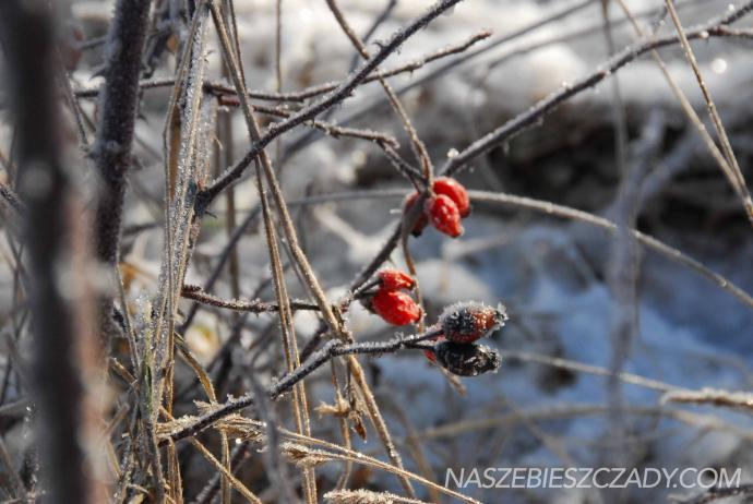 5 podpowiedzi czy warto jechać w Bieszczady zimą