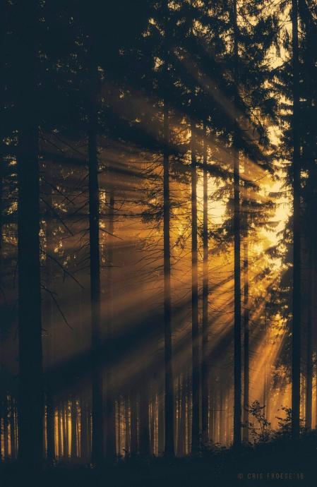 Fantastyczny wschód słońca w lesie na Dolinie koło Dusznik Zdroju
