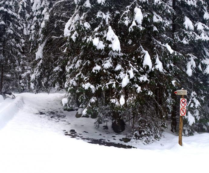 Szlak na Trzydniowiański Wierch przez polanę Trzydniówkę