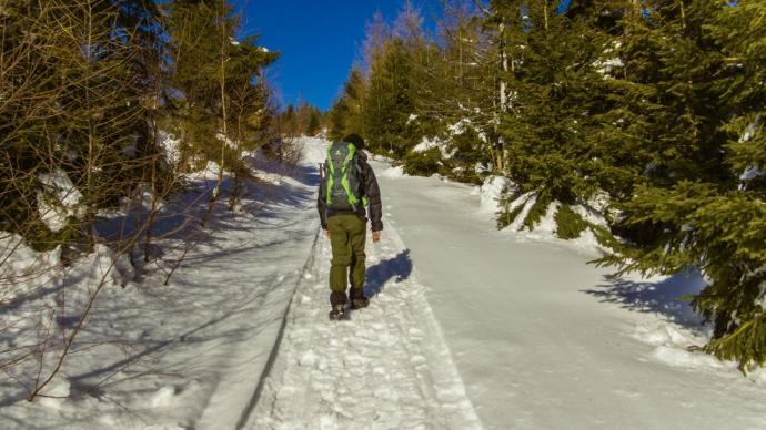 Ścieżka prowadzi przez piękny o tej porze roku las