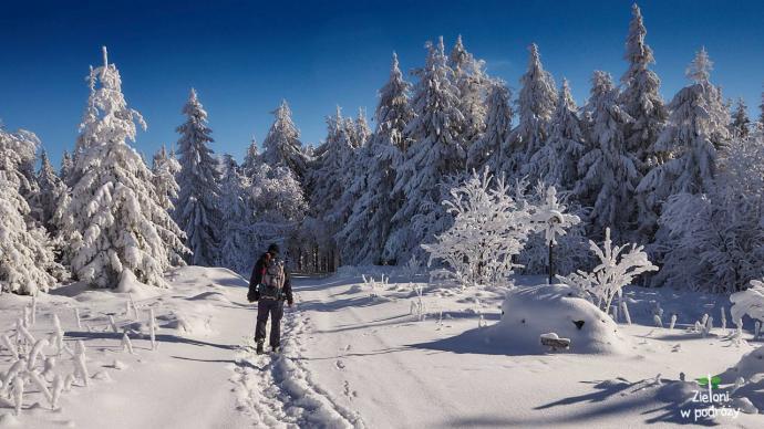 Lubań i niesamowita śnieżna kraina