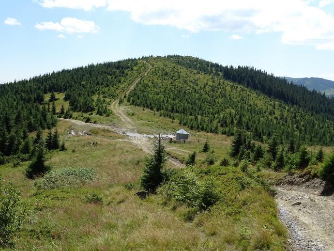 Połoniny Hryniawskie i ekspansja leśna