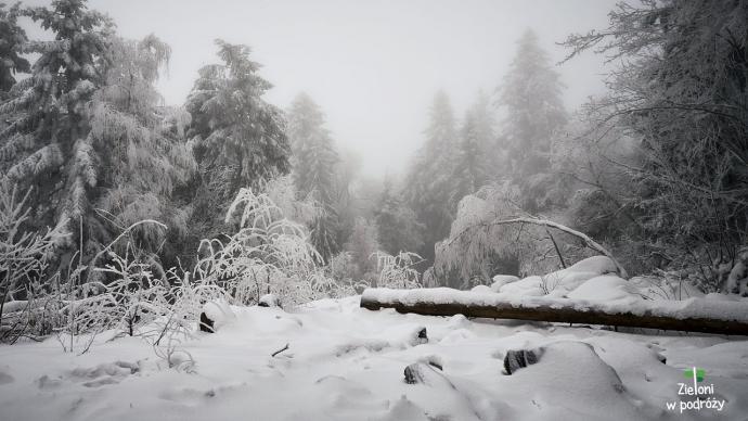Łysica zimą. Najniższy szczyt Korony Gór Polski
