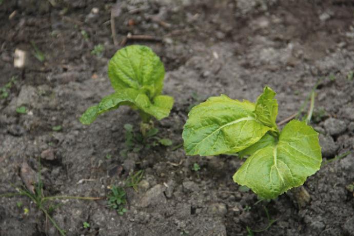 Ogródek warzywny w ABC