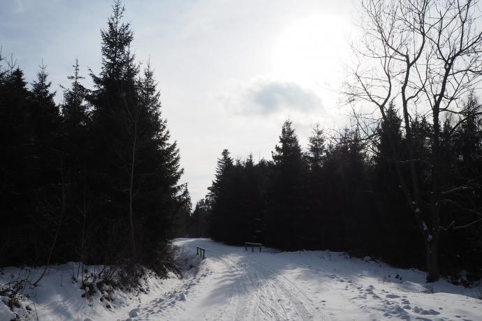 Znaki prowadzą najpierw uroczą zaśnieżoną drogą.