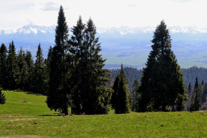 oraz widok na Tatry