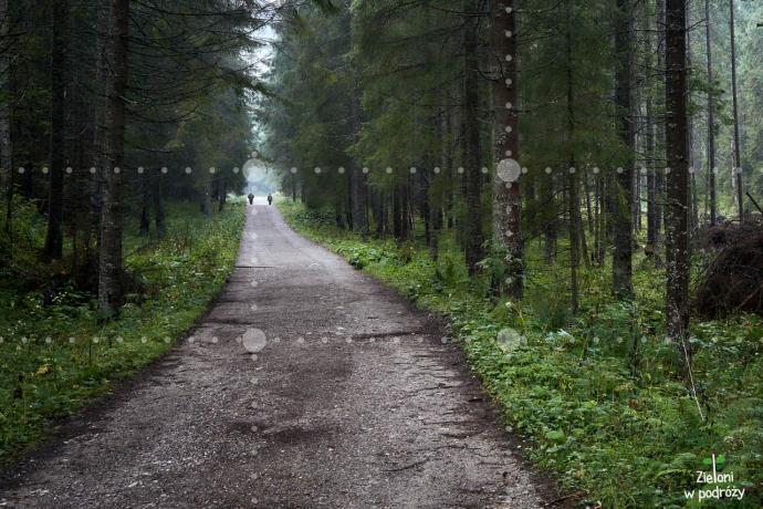 Leśna ścieżka prowadzi wzrok