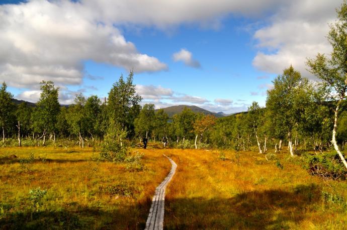 Ścieżka w lesie w Szwecji
