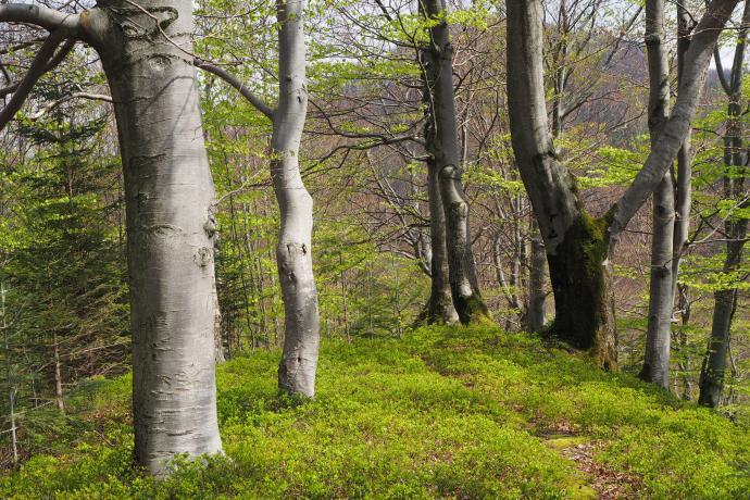 Kolory wiosennego lasu są po prostu bajkowe. Szlak na Dwernik Kamień.
