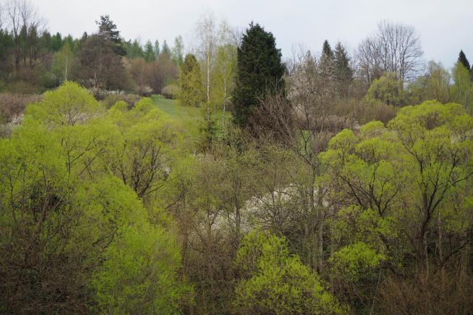 Wiosna zaczaruje nawet pochmurne dni.